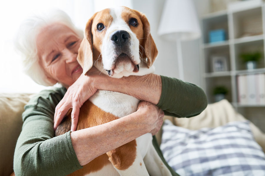 Dog Companions for Retirees