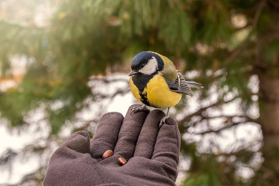 February is Bird Feeding Month